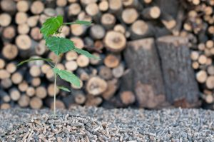 ¿Qué es la biomasa y cuáles son sus ventajas?